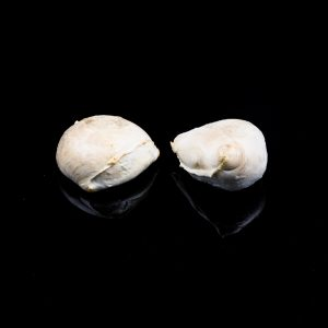 AGRCIOLA-CIIRCE-bocconcini-affumicati