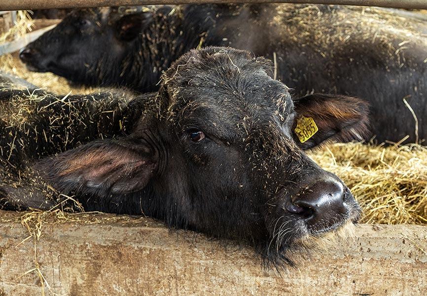 AGRICOLACIRCE-chisiamo-img6